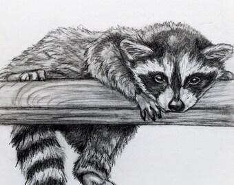 Original Pencil Drawing - Raccoon 14