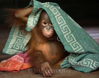 Animal Photography, Baby Nursery Wall Art, BABY ORANGUTAN Photo, Cute Baby Animal Photograph, KIds Room Decor, Baby Monkey, Baby Shower Gift