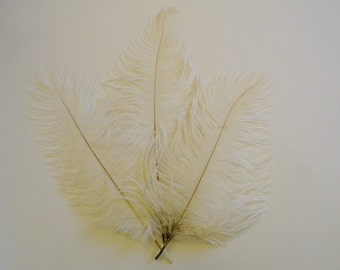 Off White  Ostrich Feathers