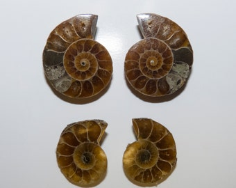 FOSSIL (30789)   2 PAIR (4 Halves) Ancient Fossilized Ammonite Shell Half