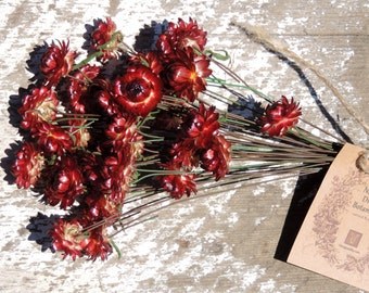 Dried Flowers Straw Flowers Bouquets 30 Red Wired by Hand Painted Brown Wires Floral Supply Florist Strawflowers Crafts From Our Garden