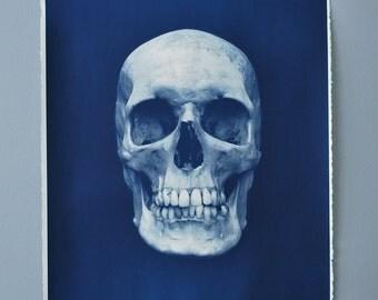 Human Skull Cyanotype blueprint