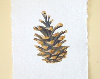 Original pine cone watercolour painting study illustration