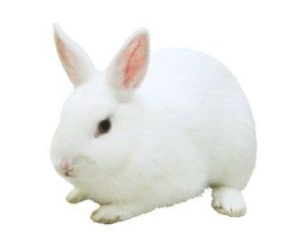 White Rabbit Pillow