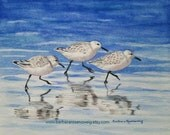 Coastal Art, Shore Bird Painting, Bird Print, Sandpiper Wall Art, Coastal Decor Beach, Beach Bird Watercolor Beach Wall Art Coastal Wall Art