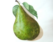 Green Pear Original Signed Watercolor Botanical Art