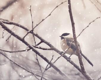 Chickadee Bird Photography,nature photography,chickadee in the snow,snowing,adorable bird,winter,black capped chickadee,cute bird print