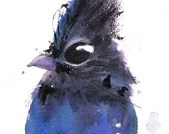 12 x 12 Bird Art, Steller Jay, Bird Art Print