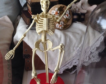 Cool Vintage Domed Skeleton Educational