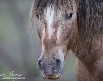 Bronze Warrior Close Up - Fine Art Wild Horse Photograph - Wild Horse - Adobe Town - Adobe Appys