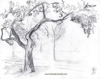 Cherry Tree - Landscape Sketch Drawing Artwork Print - by Brandy Woods