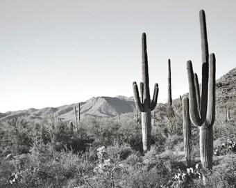 Desert Cactus Photography Print Fine Art Arizona Saguaro Cacti Black and White Southwest Rustic Winter Landscape Photography Print.