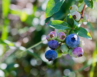 Blueberries Photography Kitchen Photography Food Fine Art Cafe Decor Blue Wall Art