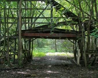 Abandoned Roller Coaster Walkway in Woods
