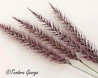 Ornamental Grass Photography, Garden Photo, Botanical Photo