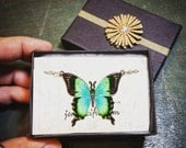 Butterfly Necklace on Silver Chain - Green Blue Black Butterfly Charm - Lovely Unique