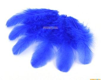 100 Pieces Blue Feather 4-9cm (YM211)