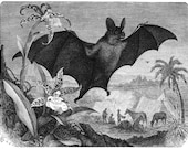 Vampire bat vintage illustration Digital Download
