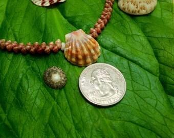 Sunrise Shell Lei - Shell Lei Kauai Hawaii Shells Beach Jewelry Eco-Friendly Collected Rare Shells Island Mermaid Style Aloha Gift Reef Gems