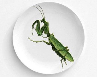 Melamine Plate - Praying Mantis Plate - Dinnerware - Melamine Dinner Plate - Vintage Insect Print - decorative plate