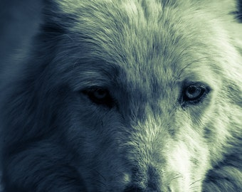 Wolf photography. Arctic wolf wall art. White wolf in moonlight. Nature wildlife photo print rustic home decor. Man cave wall decor. Mancave
