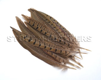 RINGNECK pheasant tail feathers, natural feather speckled brown loose for millinery, crafts, decor / 6-8 in (15-20 cm) long, 12 pcs / F151-6