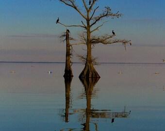 Approaching Sunset •  Landscape Photography •  Fine Art Photography •  Louisiana Photography • Nature Photography