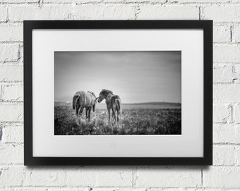 Photograph of two horses in Iceland in black and white  Fine Art Photography Horse Friends Home Decor Horse Photograph