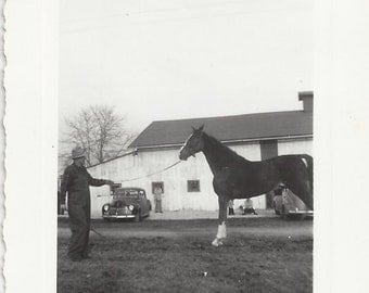 The Latest Prospect - Vintage 1940s Trainer and Gaited Horse Photograph