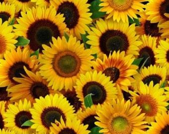 Fat Quarter Sunflowers Flowers Cotton Quilting Fabric 487 Elizabeth's Studio
