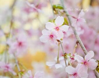 Cherry Blossom photo, Spring blossoms, pink flowers photograph, Sakura, dreamy wall art, flora photos, gift under 50