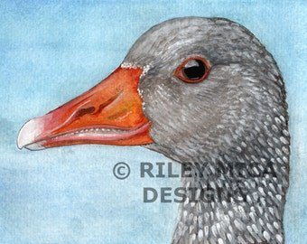 Greylag Goose - Limited Edition Print 5 x 7 or 8.5 x 11, Matted or Un-Matted - you choose