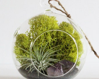Terrarium Kit - Air Plant and Amethyst Crystal Point with Charcoal Sand - Choose Small or Teardrop Hanging Glass Terrarium