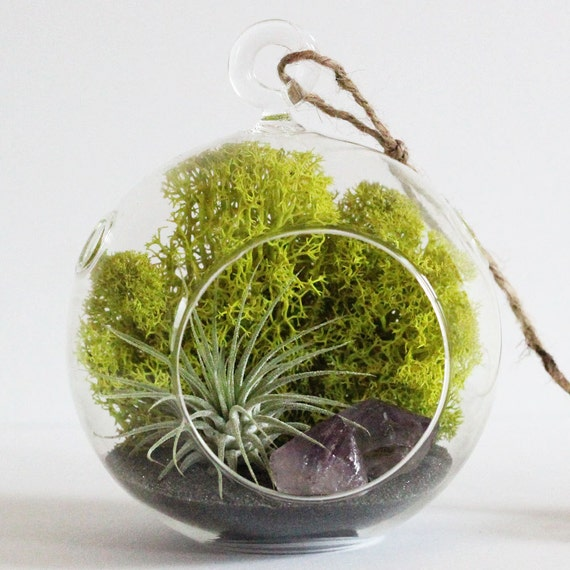Terrarium Kit || Air Plant + Amethyst Crystal Point with Charcoal Sand - Choose Small or Teardrop Hanging Glass Terrarium