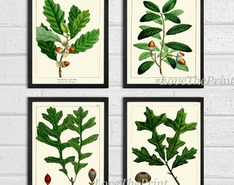 Botanical Print Set of 4 Art  Redoute Antique Beautiful Acorn Tree Branch Green Leaf Nuts Forest Tree Nature Home Room Wall Decor