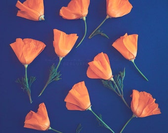 California Poppy Print, Floral Photography,  Botanical Art,  vintage print, Bohemian Wall art, Large Art, Poster size, photography, golden