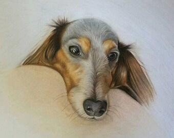 Custom Color Pencil Pet Portrait 8x10