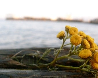 Nature Photography, Ocean Photography, Pacific Northwest, Golden, Yellow, Home Decor, fPOE, High Tide