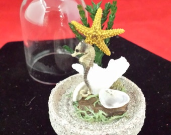 Taxidermy Seahorse and starfish Display in Glass Dome