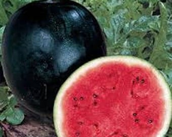 WATERMELON FRUIT SEEDS 10 Fresh seed ready to plant in your garden