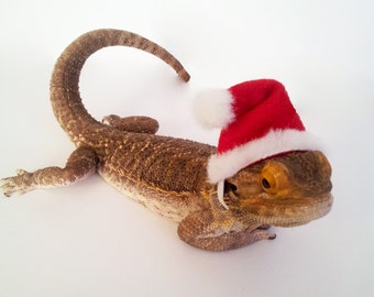 Bearded Dragon Clothing! Santa Hat!
