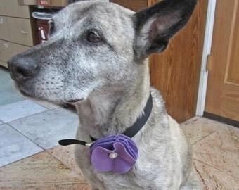 Purple Felt Button Flower for Dogs