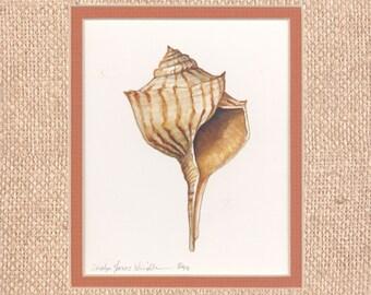 Turnip Whelk 9 x 8 original watercolor