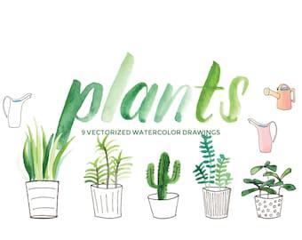 Plants, Succulents, Cactus - Hand-painted watercolor digital clip art PNG & vector