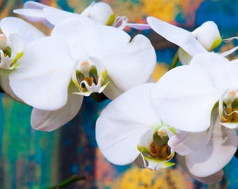 Painted Orchids