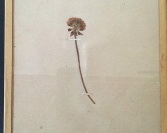 Vintage Botanical Specimen