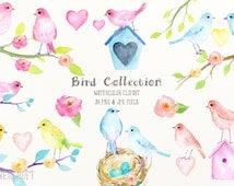 Watercolor Clipart Bird Collection, blue bird, pink bird, yellow bird, peach bird, bird box, cards for instant download, pastel color
