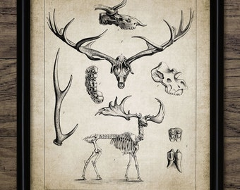 Vintage Prehistoric Deer Print - Irish Elk Illustration - Prehistoric Deer Skeleton - Printable Art - Single Print #532 - INSTANT DOWNLOAD