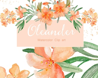 Oleander and  Hortensia flowers watercolor clipart, hand drawn. Apricot Oleander wedding, pastels & light blue colour flowers. Logo, Blog.