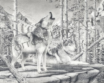 Wolves in the wild, nature drawing, howling timber wolves